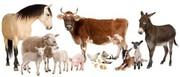 Поставки кормов и кормовых добавок для сх животных